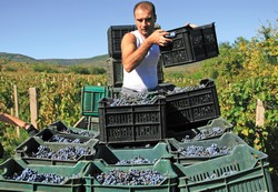 Vendanges en Bulgarie