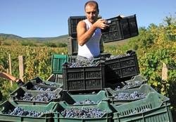 Vendanges en Bulgarie
