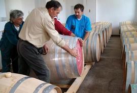 Barriques vins bulgares