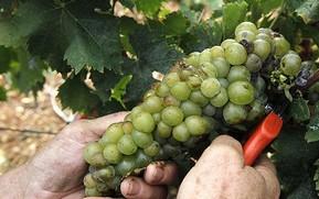 Vins bulgares et Cépages Bulgarie